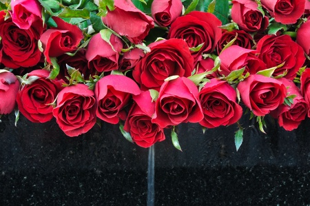 Rose with fountain