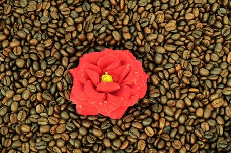 Coffee and flower photo