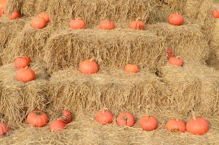 Pumpkins on a farm photo