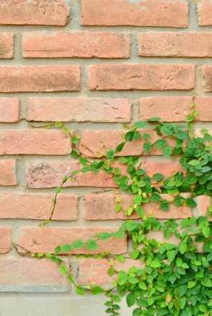 Green plant on brick wall photo