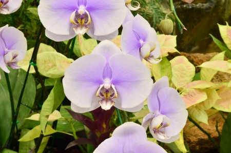 orchid background photo