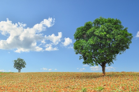big and small trees in the field with blue sky photo