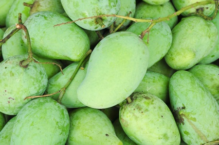 Fresh green mangoes photo