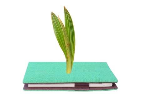 Young green small plant growing from green book isolated photo