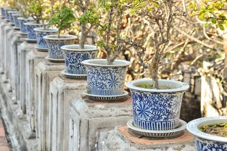 plants in pots photo