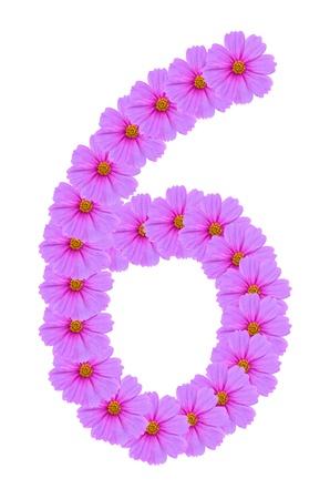 Number 6, Cosmos flower alphabet isolated on white photo