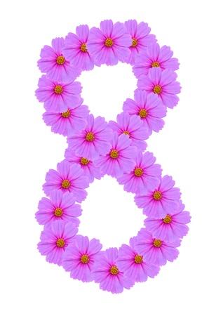 Number 8, Cosmos flower alphabet isolated on white photo