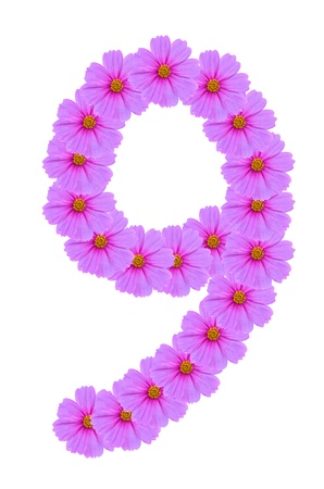 Number 9, Cosmos flower alphabet isolated on white photo