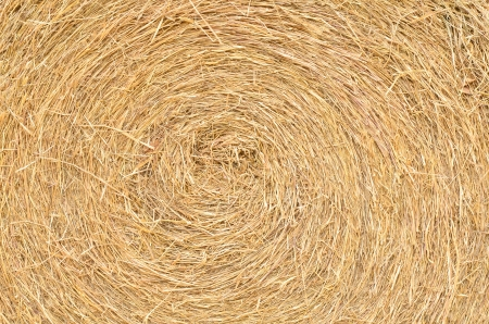 close up straw texture photo