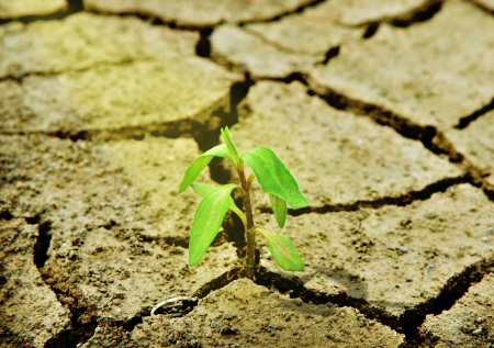 Fresh green tree growing through dry cracked soil Stock Photo - 16389982