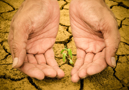 Human hands holding young green plant in the soil  Ecology concept photo