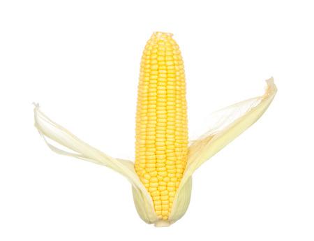 husks: Toast sweet corn with the husks still on, isolated on white