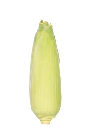 husks: Sweet corn with the husks still on, isolated on white background