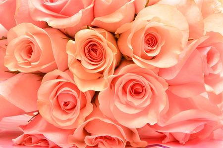 Hermosa rosa rosa fondo
