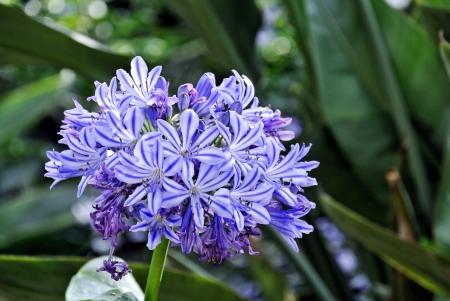 closeup: blue flowers Stock Photo