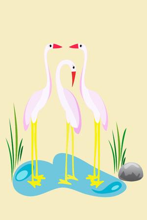 wader: Family of heron