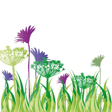 oat field: Silhouette colorful flowers and grass on meadow