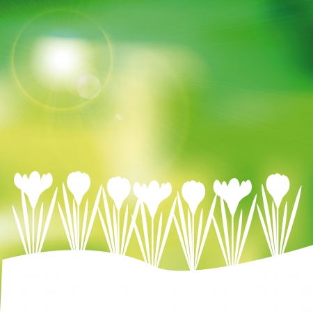 Green and yellow spring with sunlight Stock Vector - 24914002
