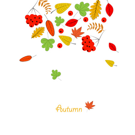autumn leafs: Card with colorful autumn leafs and rowanberrys