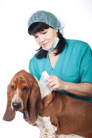 Female vet is taping up a dog Stock Photo - 17194234