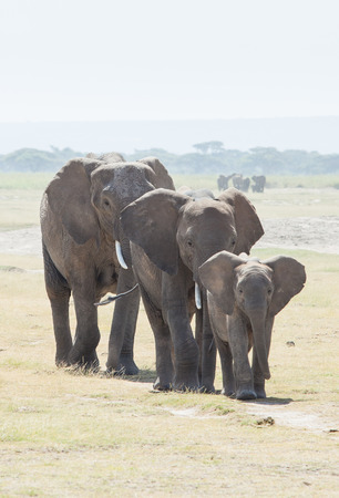 Elephant Family, Mother or Father with Baby