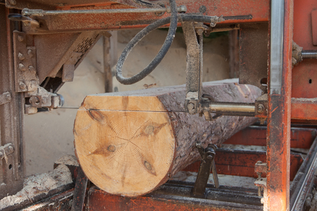 sawmill: Sawing boards from logs with modern sawmill