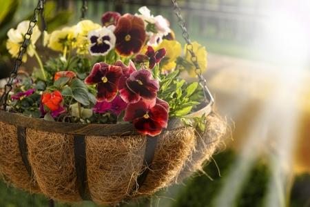 Flower basket in springtime Imagens