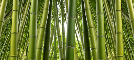 Bamboo Jungle Фото со стока