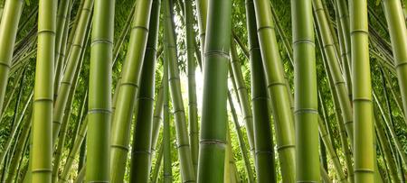 Bamboo Jungle Foto de archivo