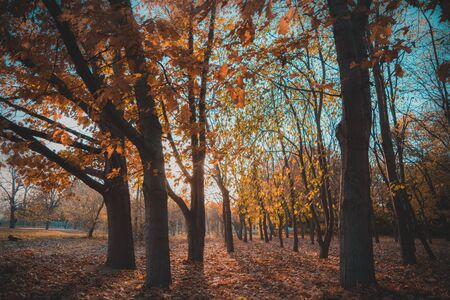 An autumn landscape in the park on a beautiful sunset with some golden colors.