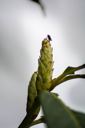 A close up image of a fly silhouette standing on the top of a trees bloom.