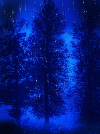 Fantasy forest silhouette with fong and star photo