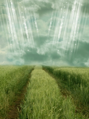 wheat field with rays of light in  summer