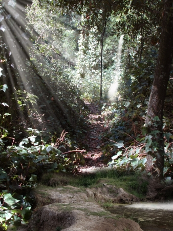 manipulation: magic pond in the forest with ray of light Stock Photo
