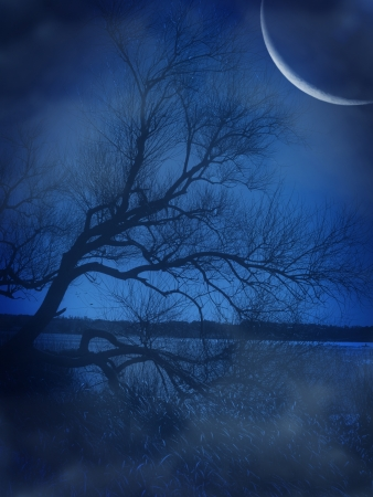 ligh: lonely tree in a beautiful blue lake
