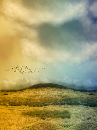 Fantasy Landscape in the field with birds photo