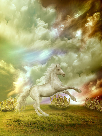 white horse in the field in stormy day photo