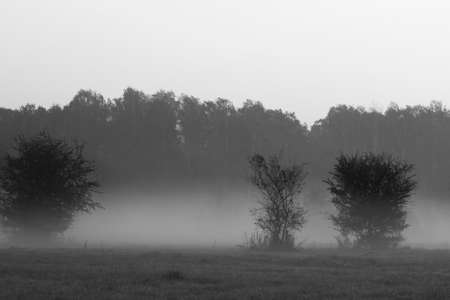 Black and white picture of a foggy landscape. Blurred silhouettes of trees and bushes are due to thick fog.