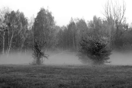 Thick fog in the meadow near Warsaw, Poland. The silhouettes of the bushes and the trees in the forest are blurred due to the mist which rises above the field.