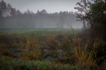 A dark and moody day in Kampinos National Park. The fog is rising and covering withered plants in the meadow, the trees are turning their leaf colors into yellow and orange. Autumn is here.