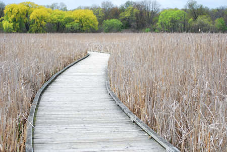 A boardwalk on Peele Island, Canada