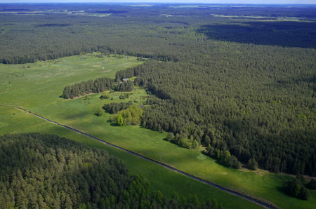 Forest at summer, aerial view, Lithuania 스톡 콘텐츠
