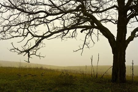 Foggy field single tree, in November. Stock Photo - 5934153