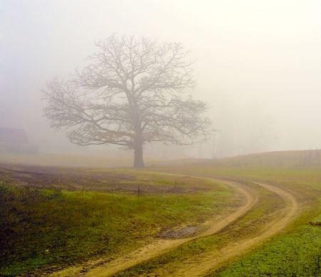 Niebla de campo único árbol, en noviembre.  Foto de archivo - 5934145