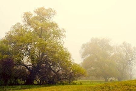 Niebla de oto�o en la pradera de bosque.  Foto de archivo - 5934150