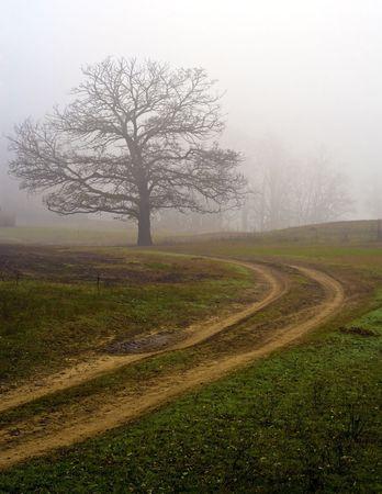 Niebla de campo único árbol, en noviembre.  Foto de archivo - 5934148