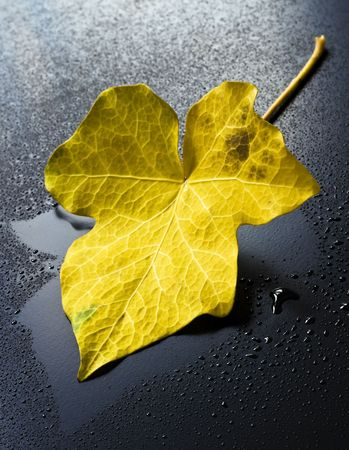 Ivy leaves, drops of water in a dark background. photo