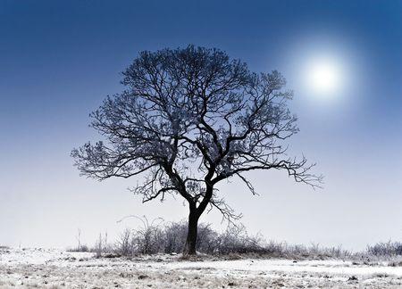 Sunny winter landscape, a single tree. photo