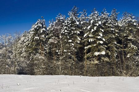 Snowy pine forest in Europe. Stock Photo - 6355088