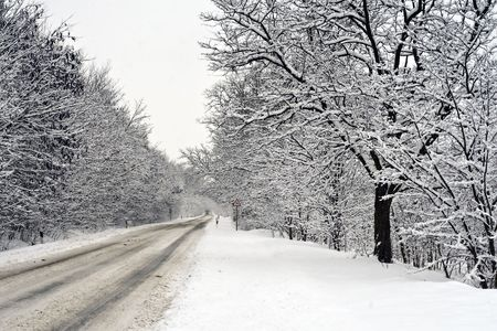 Snowy winter road in the woods. Stock Photo - 6355093